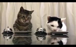 Bystre kotki