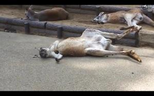 Kiedy obudzisz się na mega kacu