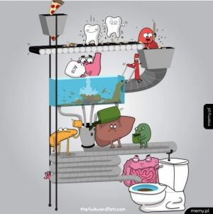Cały cykl jedzenia