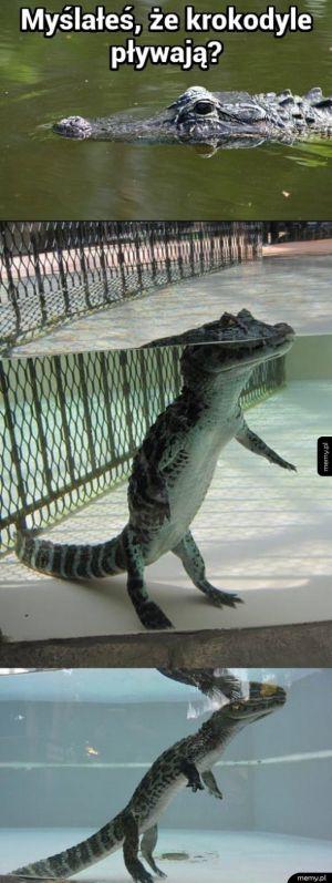 Myślałeś że krokodyle pływają?