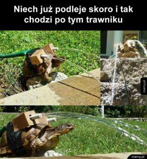 jak wykorzystać żółwia