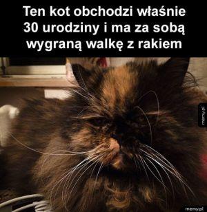 To jest super kot!