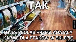 Gołąb na zakupach