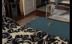 Przerażający królik