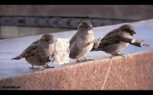 Nowoczesne ptaki