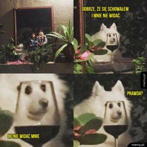 Pies dobrze schowany
