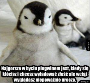 Problemy pingwinów