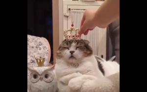 Król koteł