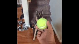 Piesek i piłeczka