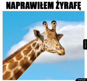 Tak powinny wyglądać wszystkie żyrafy