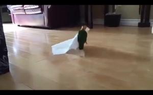 Mam papier toaletowy! Jupi mam papier!