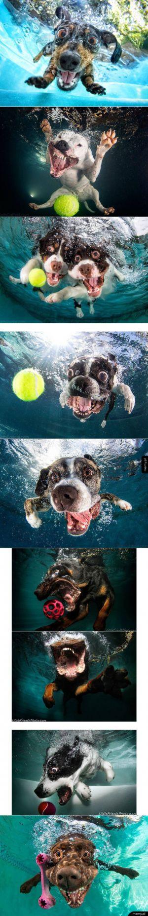 Pieski pod wodą