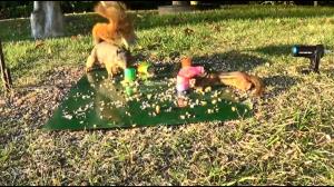 Wiewiórki też bywają wredne
