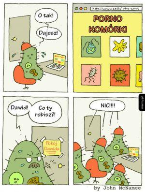 Komórki