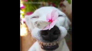 Psy są najlepsze