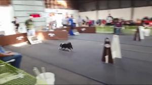 Najszybsze psy na świecie
