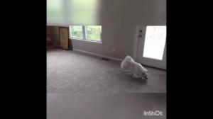 Pies pierwszy raz schodzi po schodach