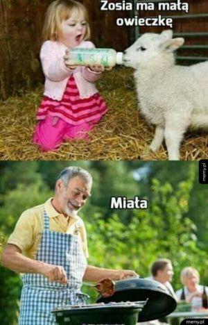 Urocza owieczka