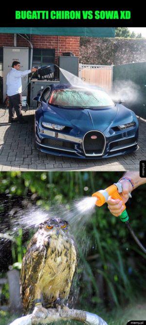 Bugatti i sowa