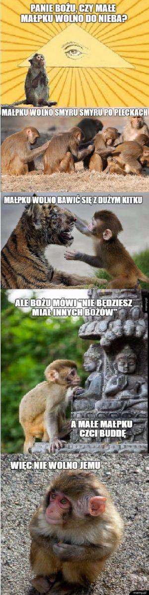 Małpku wolno do nieba?