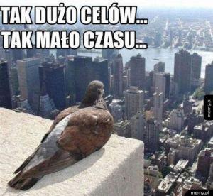 Problemy gołębi