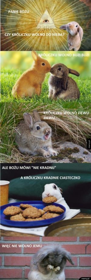 Czy króliczku wolno do nieba?