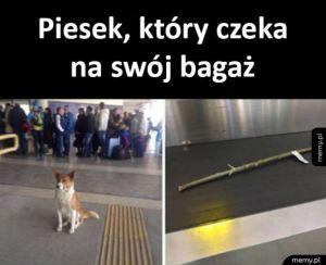 Tymczasem na lotnisku