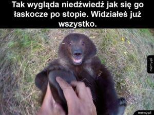 Słodki niedźwiedź