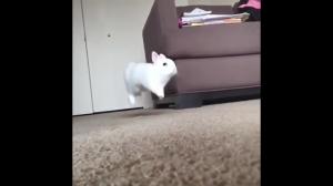 Slow motion hops