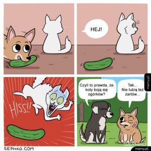 Koty i ogórki