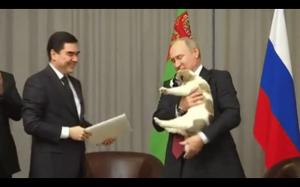 Putin ratuje pieska:)