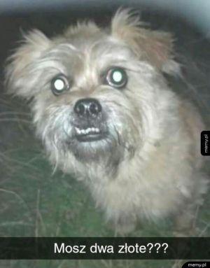 Psi włóczęga
