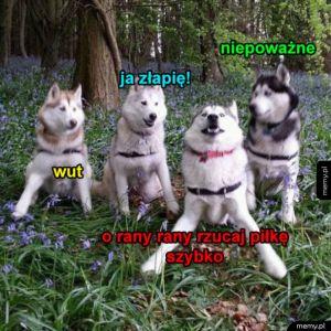 Pieski chcą się bawić