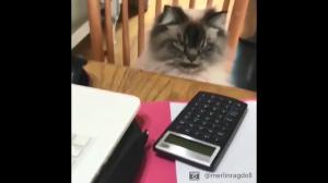 Kiedy masz robić zadania z matmy: