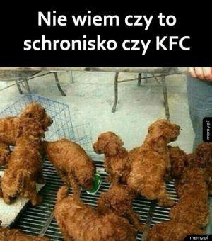 Pieski czy kurczaki