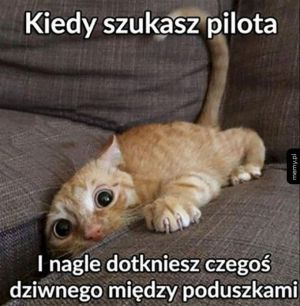 Kiedy szukasz pilota