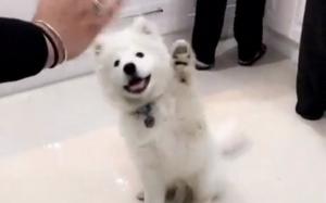 Psie przywitanie