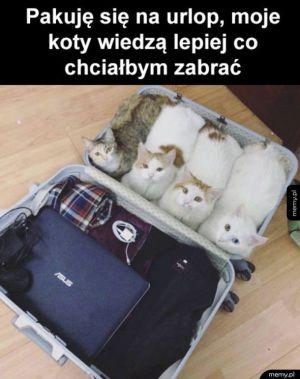 Dziękuję kotki