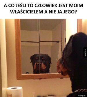 Psie rozterki