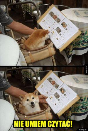 Przecież jestem psem!