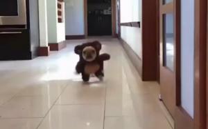 Misiek uciekł z zoo