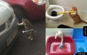 Koty po roku w Rosji
