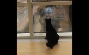 Trollowanie czarnego kotka