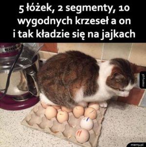 Co ten kot