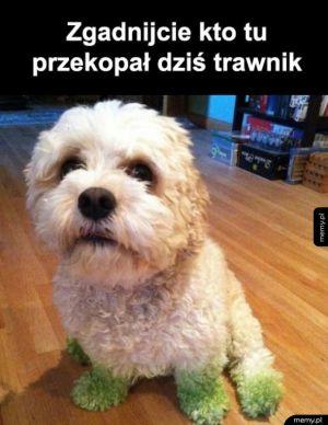 WInny pies