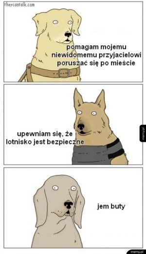 Są trzy rodzaje psów: