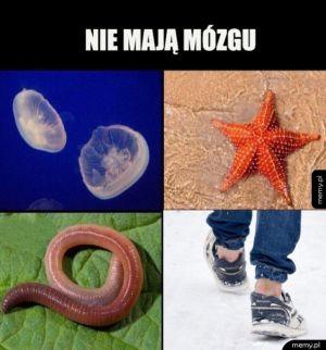 Stworzenia bez mózgu