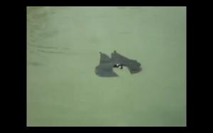 Pływający batman