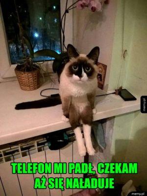 Zabawny koteł