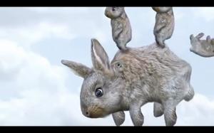 Jak rozmnażają się króliki